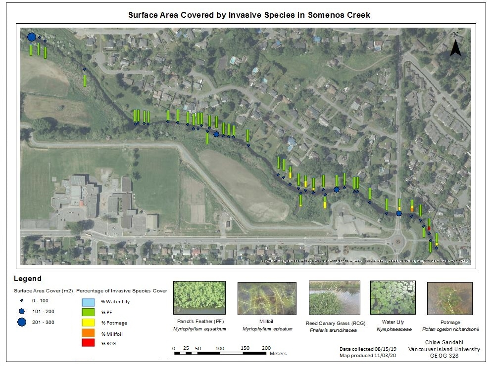 Map of Surface Area covered by Invasive Species in Somenos Creek