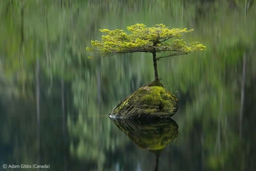 Tree on a rock in a pond